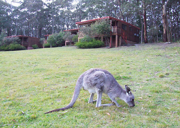 Jenolan Caves Cottages - Accommodation Main Beach