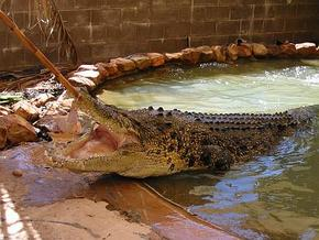 Wyndham Zoological Gardens and Crocodile Park - Accommodation Main Beach