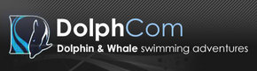 Dolphcom - Dolphin  Whale Swimming Adventures - Accommodation Main Beach