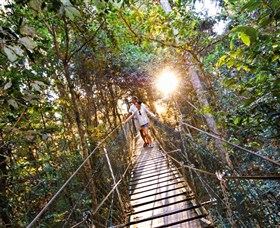 Tree Top Walkway - Accommodation Main Beach
