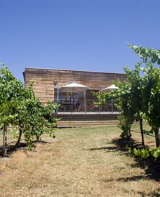 Shantell Vineyard - Accommodation Main Beach