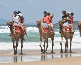 Camel Rides with Coffs Coast Camels - Accommodation Main Beach