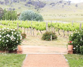 Brindabella Hills Winery - Accommodation Main Beach