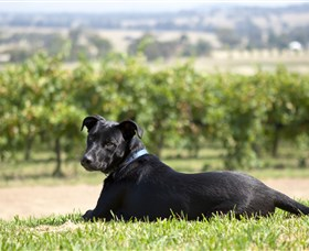 Moothi Estate Vineyard and Cellar Door - Accommodation Main Beach