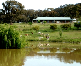 Clearview Alpacas - Accommodation Main Beach