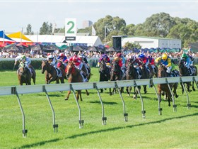 Morphettville Racecourse - Accommodation Main Beach