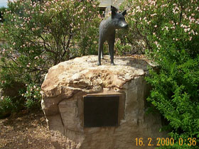 Dingo Statue - Accommodation Main Beach