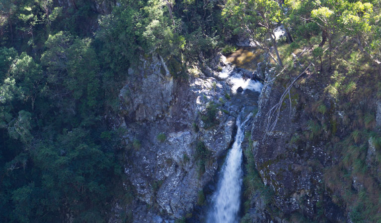 Lyrebird Falls walking track - Accommodation Main Beach