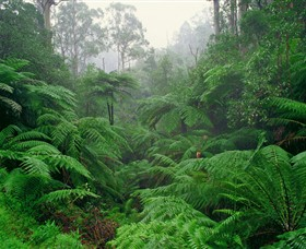 Tarra Bulga National Park - Accommodation Main Beach