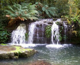 Barrington Tops National Park Walks - Accommodation Main Beach