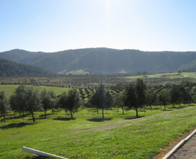 Hastings Valley Olives - Accommodation Main Beach