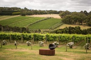 Montalto Vineyard Mornington Peninsula Discovery Wine Tasting and Lunch - Accommodation Main Beach