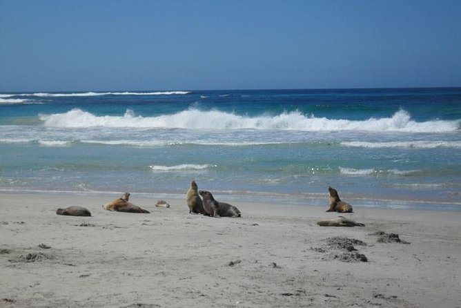 Kangaroo Island in a Day Tour from Adelaide - Accommodation Main Beach