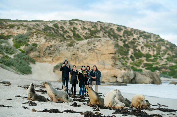 Small-Group Kangaroo Island 4WD Tour from Adelaide - Accommodation Main Beach