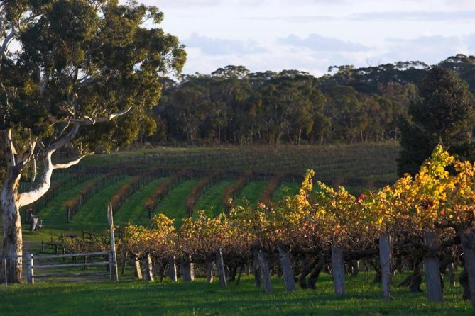 Barossa Valley with Hahndorf Tour from Adelaide - Accommodation Main Beach