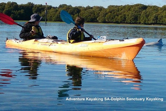 Dolphin Sanctuary and Ships Graveyard Kayak Tour - Accommodation Main Beach