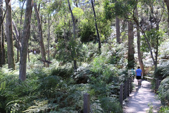 Self-Guided Waterfall Gully to Mount Lofty Hike from Adelaide - Accommodation Main Beach
