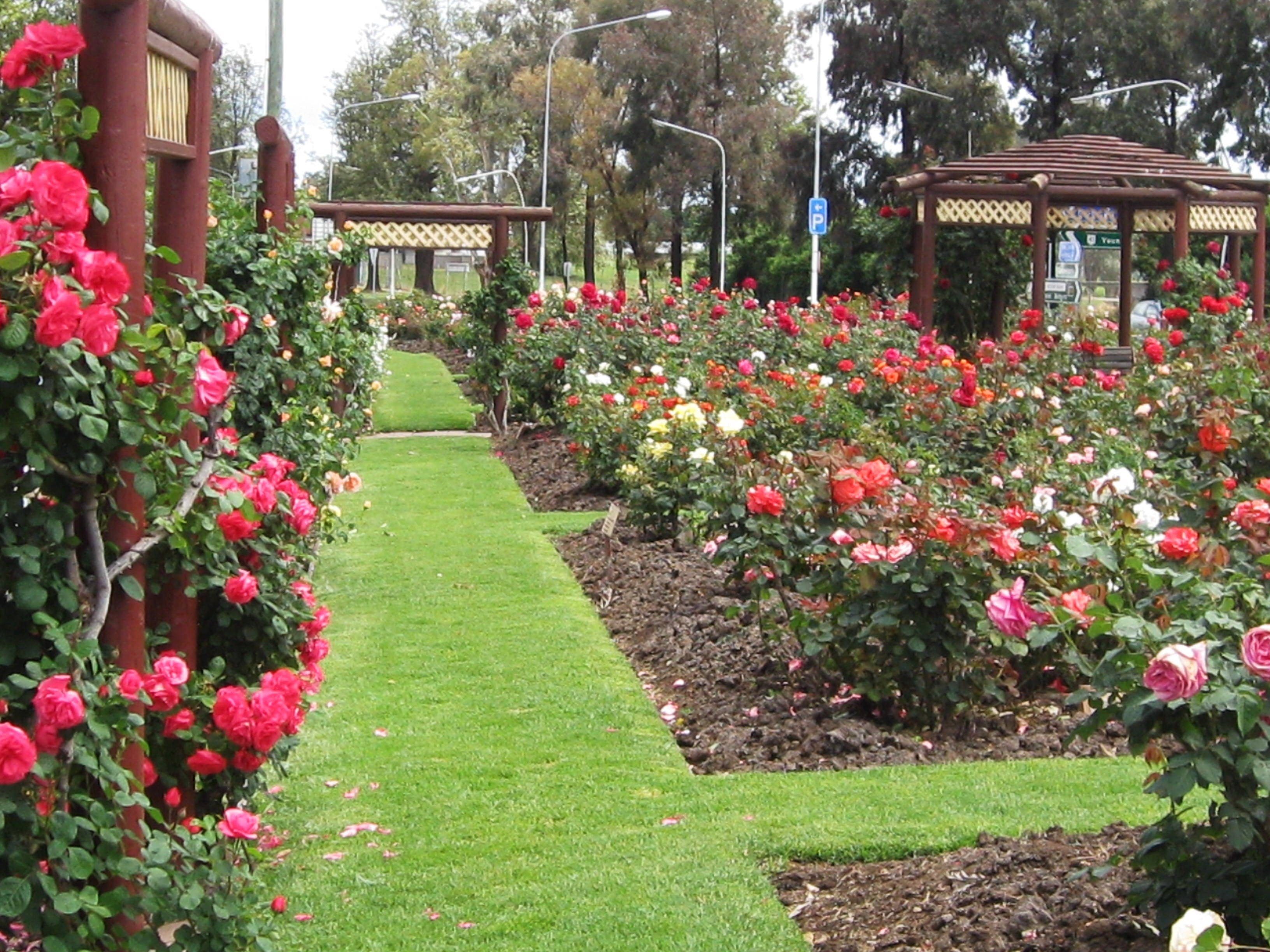 Cowra Rose Garden - Accommodation Main Beach