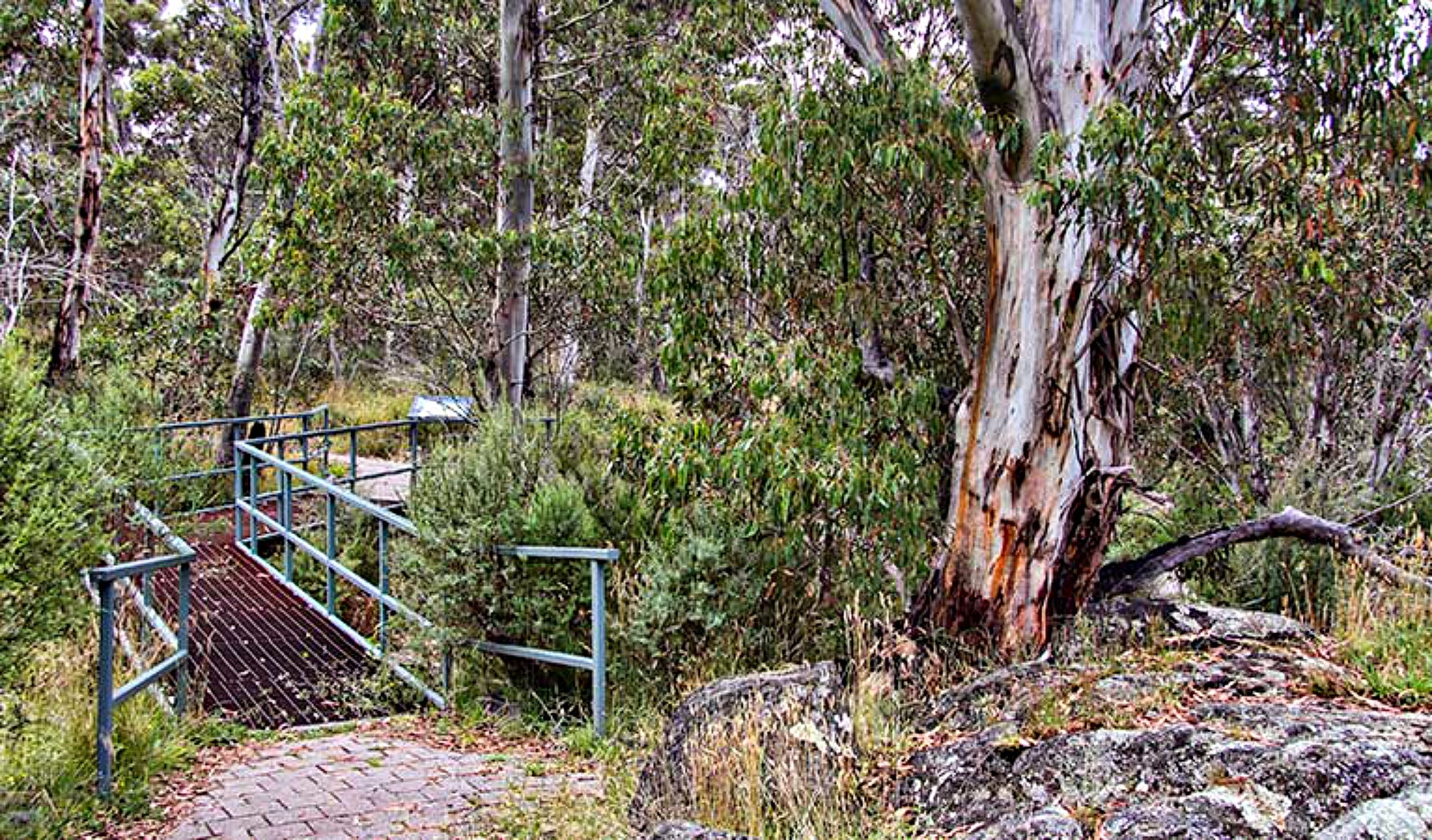 Sawpit Walking Track - Accommodation Main Beach