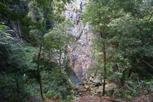 Kondalilla Falls Circuit Kondalilla National Park - Accommodation Main Beach