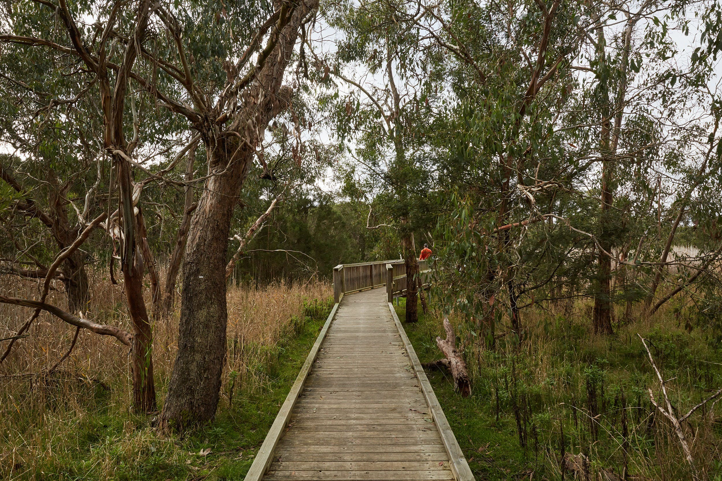 The Briars Park Walking Trails - Accommodation Main Beach