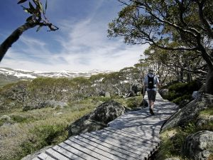Snow Gums boardwalk - Accommodation Main Beach
