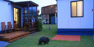 BIG4 Kelso Sands Holiday  Native Wildlife Park - Accommodation Main Beach